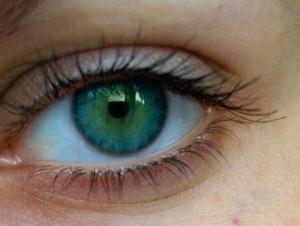 Eye Model Close View